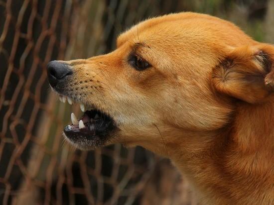 Как себя вести при встрече с бродячей собакой?