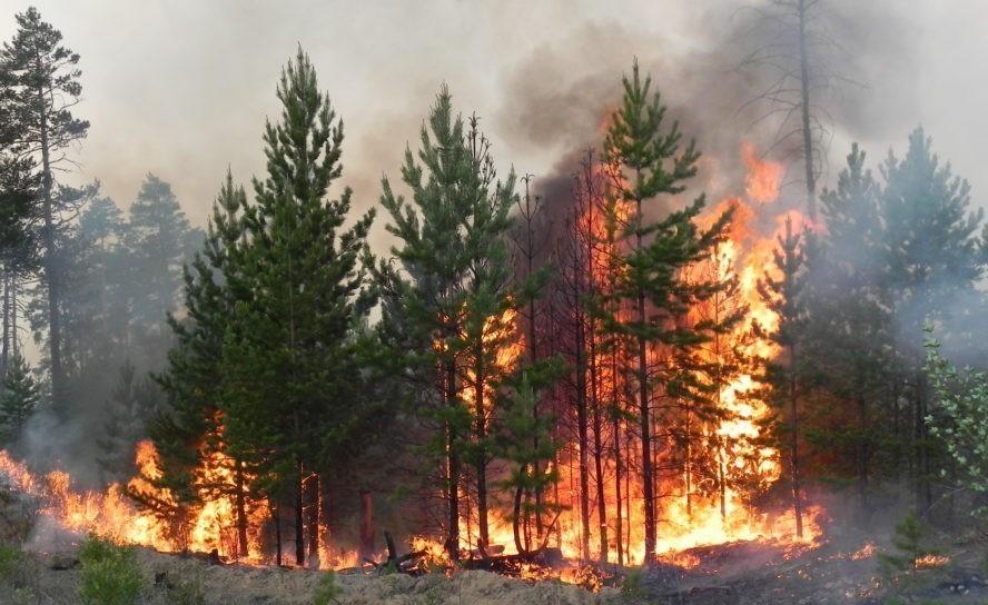Берегите лес от огня!